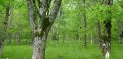 Piano di Assestamento Forestale